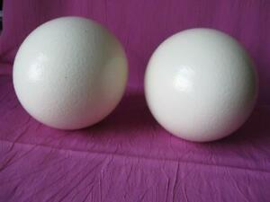 Ostrich egg shell for crafts or decoration from domestic birds, Priced for both