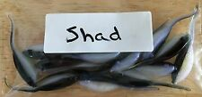 Crappie Soft Bait Jigs 15 Pack Made in USA Bicolor Shad