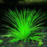 Aquarium grass seed (Mixed), water aquatic plant seeds 1000 Pcs/Pack