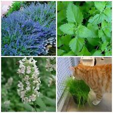 MEGA CAT LOVERS PACK Catnip catmint cat grass seeds over 5000 seeds BEST VALUE!!