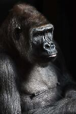 Gorilla Portrait Journal : 150 Page Lined Notebook/diary by Cool Image (2016,.