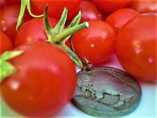 Red Sweetie cherry tomato heirloom non-gmo DELICIOUS VERY PRODUCTIVE O.P. EZ2GRO