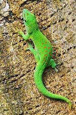 An Adorable Green Madagascar Gecko on a Palm Tree Journal : 150 Page Lined.