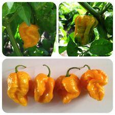 7pot YELLOW 7pod GIALLO ultrascharfe chili knautschige frutti aromatici Chilli