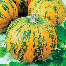 Seeds Pumpkin Vitamin Vegetable Organic Heirloom Russian Ukraine