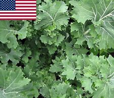 Siberian Kale- Heirloom Organic Variety- 500+ 2017 Seeds