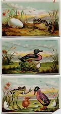 Lot of 3 Victorian Trade Cards Frog Duck Peacemaker Eggspectation Eggspatiation