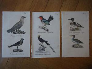 3 gravures de zoologie : OISEAUX par REICHENBACH  ca 1835