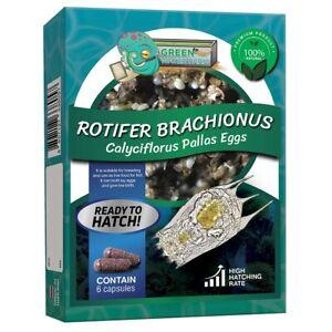 Rotifer Brachionus Calyciflorus Pallas Eggs Live Fish Food for Fry