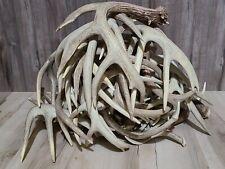 5 Pounds Of #1 whitetail Deer Sheds Antlers Horns Elk