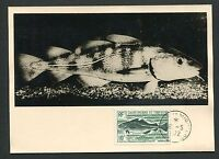 ST. PIERRE MK 1972 FISCHE FISH PECHE MAXIMUMKARTE CARTE MAXIMUM CARD MC CM d7050