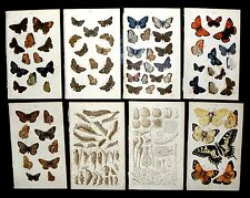 15 Butterfly/Moth Coloured Book Plates, Collectible & Vintage. Paper.