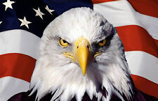 Framed Print - Eagle and the American Flag (Picture Poster Animal USA Bird Art)