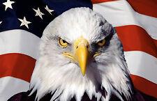 Incorniciato stampa-Aquila e la bandiera americana (PICTURE POSTER animale USA UCCELLO ART)