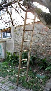 Antica scala rurale potatura contadino ulivo campagna vendemmia lunghezza cm.233