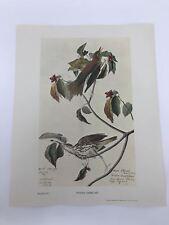 John James Audubon Folio Plate 279 Wood Thrush Limited 750