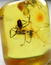 Genuine baltic amber stone with rare ANT fossils insects inclusions 0.70 grams