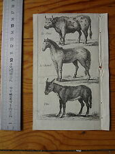Ancienne Gravure d'animaux  : Boeuf, Cheval, Ane