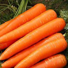 Seeds Carrot Autumn Queen Red Vegetable Organic Heirloom Russian Ukraine