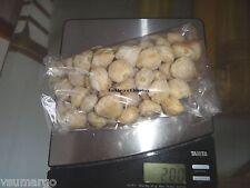 200 grams Candlenut / Kukui Nut