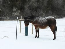Horse, Cattle Waterer THE WATERING POST, Frost Proof, Simple, Sanitary! 60 inch.