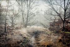 VLIES FOTOTAPETE Tapeten Rollen Wald im Nebel Wandbilder XXL Bäume Natur 767