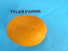 5+ Meyer Lemon  citrus seeds, farm fresh, ready to grow