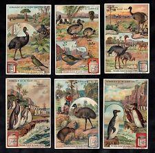 Flightless Birds Rare Cards Set Liebig 1908 Dodo Emu Ostrich Parrot Penguin Kiwi