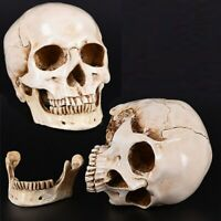 Retro Realistic Human Skull Replica Model Medical Art Teach 1:1 Life Size