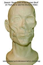 Sculpture Study - Human Head Model Study - How to Sculpt a Human Head
