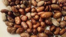 Calabash Nutmeg, M. Myristica, ehuru/ehuri, African /Jamaican Spice 60g(2oz).