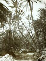 TUNISIE Tozeur Palmiers c1910,Photo Stereo Plaque Verre VR5L2n1