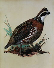 vintage Quail by Lynn Bogue Hunt