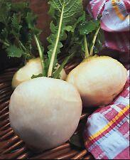 Légumes Navet Boule de Neige - 200 Graines