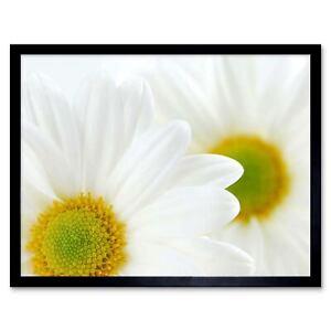 White Daisies Daisy Flower Macro 12X16 Inch Framed Art Print
