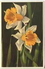 VINTAGE DAFFODIL JONQUIL NARCISSUS FLOWER BOTANICAL NATURE HORTICULTURE POSTCARD