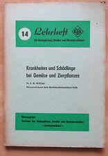 DDR Lehrheft 14  Beschreibung Krankheiten Schädlinge Gemüse Zierpflanzen Ursache
