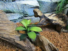 Zdp-345 Succulent 15cm Plant Reptile Enclosure Snake Lizard Frog Desert Cage