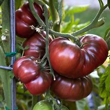 Schwarze Tomate – black Krim – Samen Tomatensamen
