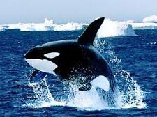 TRANSFER STAMPA MAGLIETTA T-SHIRT FELPA ORCA