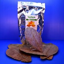 "Catappa Leaves 50 Leaf 7""- 12"" Tantora Indian Almond KETAPANG Aquarium Fish Tank"