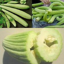 Armenische Riesen Gurke Rarität Melonengurke Metergurke 10 Samen Garten Decor