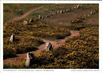 Postkarte Frankreich Bretagne Carnac AK Morbihan Alignements von Kerlescan