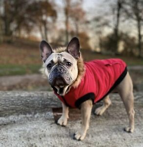 Genuine Canada Pooch North Pole Parka Red Size 16 8-11kg