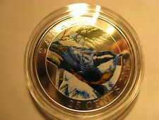 CANADA 2007 RED BREASTED NUTHATCH COLOURED OVERSIZE 25 CENT COIN