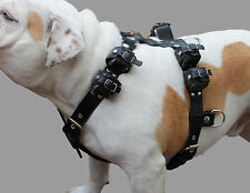"Real Leather Weighted Pulling Dog Harness Exercise Training 10 Lbs 35""-44"" Chest"