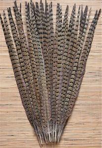 Natural pheasant tail feathers 10-1000 Pcs 25-30 cm / 10-12 inch Wholesale