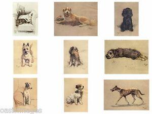 Cecil Aldin dog print a dozen dogs or so photoprint, iron on transfer or sticker