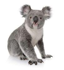 aufkleber sticker wand kochen kind zimmer dekoration tier koala australien