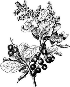 Flower - Flowers - Spray - Berries - Leaves Unmounted Clear Stamp Approx49x60mm
